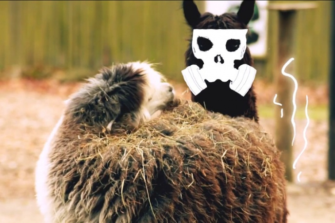 "Pork Pores Porkinson – ""Ludzkie zoo"" (wideo)"